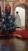 Рождество Христово: Благовещенская ёлка